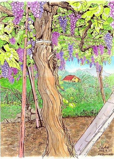 ぶどう園の木の下で(color)