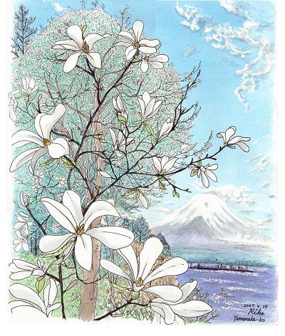山中湖のこぶしの花