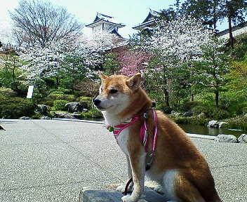 isikawamon1.jpg