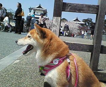 isikawamon3.jpg