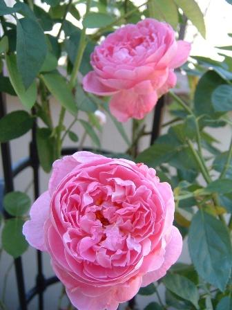 mary-rose10.jpg