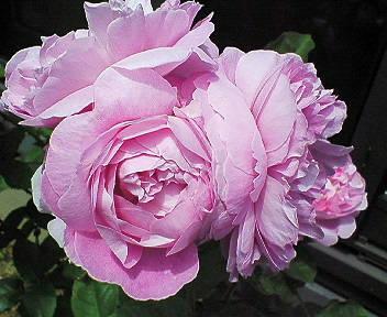 mary-rose2.jpg