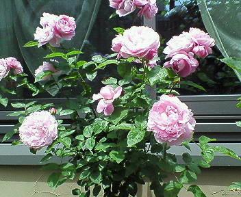 mary-rose3.jpg