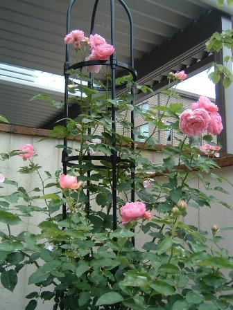 mary-rose8.jpg