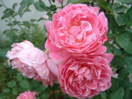 mary-rose9.jpg