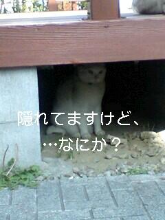 070523_1552~0001-0001.jpg