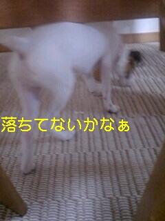 070710_1913~0001-0001.jpg