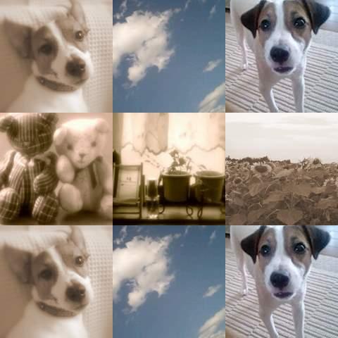 collage6-2.jpg