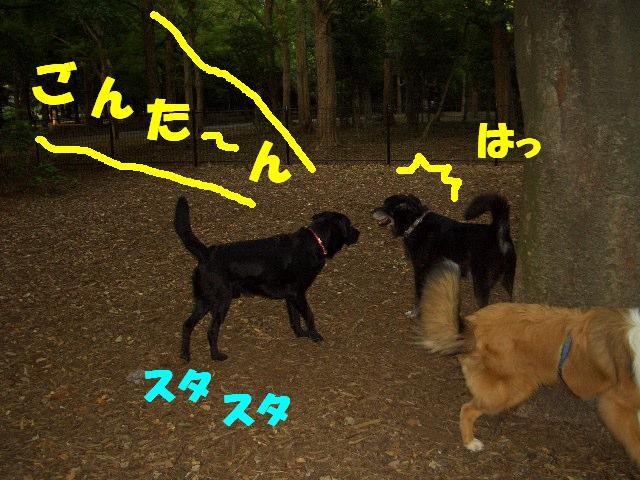 CIMG0776.jpg