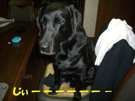 CIMG2008_3.jpg