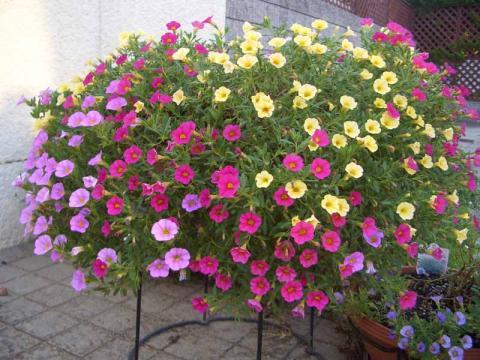 ガーデニング、庭、花、草、木、植物全般