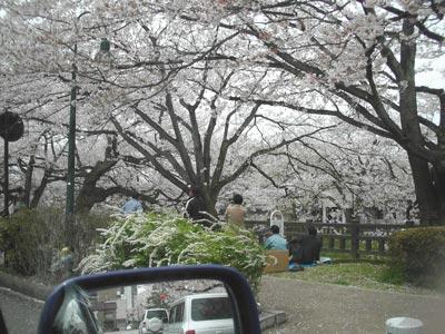 sakura-matsukawa2
