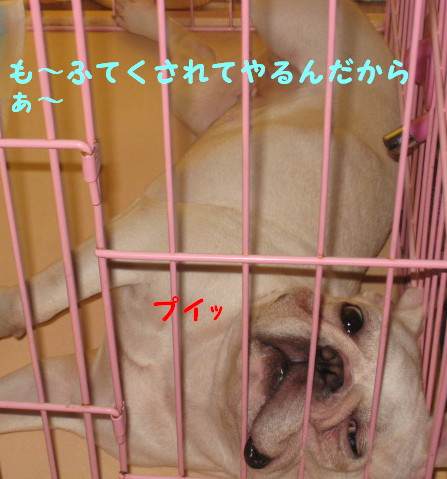 IMG_077422.jpg