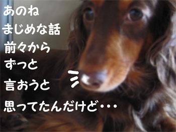 chirishi1.jpg