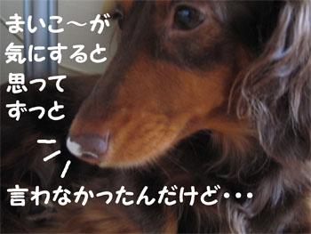 chirishi2.jpg