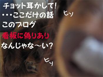 chirishi3.jpg