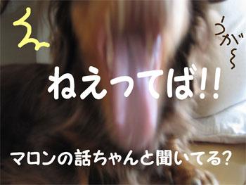 chirishi5.jpg