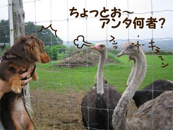 gantobashi.jpg