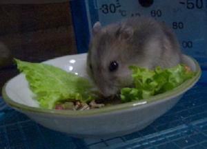 お野菜付き♪