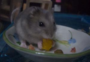 かぼちゃも食べるよ♪