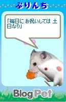 ぷりんちちゃん_1