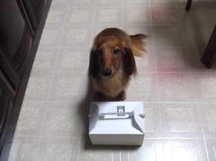 箱の中に美味しい物が入ってるって知ってるさ!