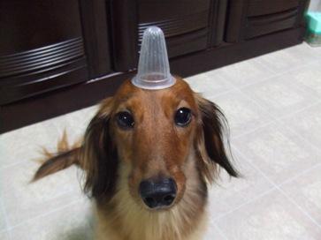 これは新たなトンガリ帽子?!