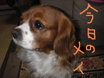 20060113005818.jpg