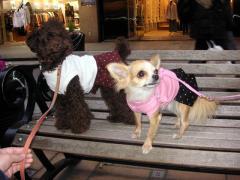 横浜元町でスカートを買ってもらったよ!