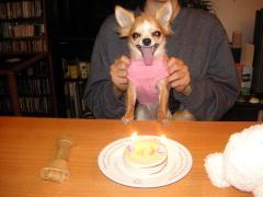 わーい、みかん満2歳!でも、ケーキはお預けだよ