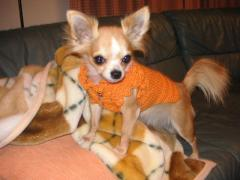 ママがセーターを編んでくれたよ!