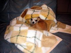 寒くて寒くて、毛布から出られません...