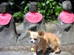 鎌倉でハイキング初体験! 【行楽犬みかんが行く 1】
