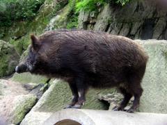 七沢温泉・七沢荘のペット専用露天風呂で、いい湯だな~【行楽犬みかんが行く 4】