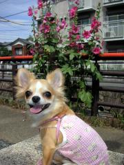お散歩再デビュー!やっぱ、お外がいちばん!!