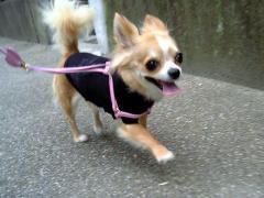 退屈な梅雨時はお散歩がいちばん!