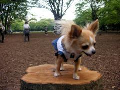 代々木公園のドッグランに行ったよ!