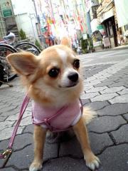 七夕さまの笹の葉サ~ラサラ♪にびっくり!