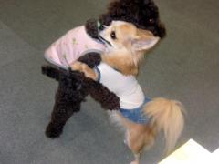 ルルと犬相撲だぞぉ