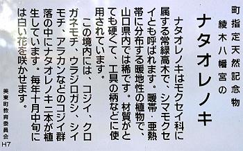 綾木八幡宮のナタオレノキ-説明板