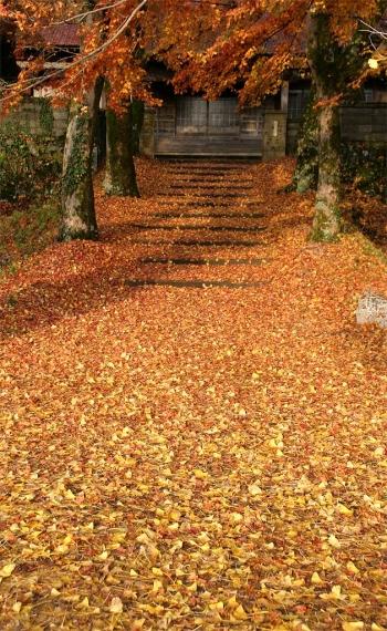 絵堂・養泉寺の落葉風景