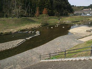 ビオトープのある大田川-2