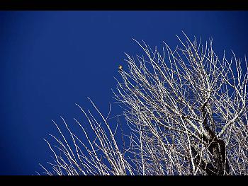 青空と細く白い枝、プラス野鳥