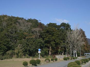 三島神社社叢(カヤの木の巨樹群)