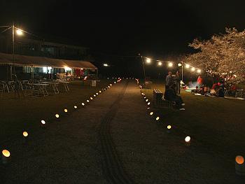 夜の「桜まつり」竹灯篭-1
