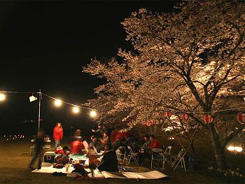 夜の「桜まつり」お花見