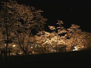 夜の「桜まつり」