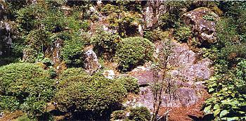 名勝『地蔵院の庭園』