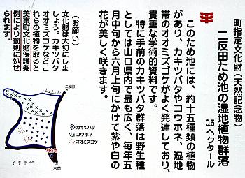 二反田のカキツバタ-2