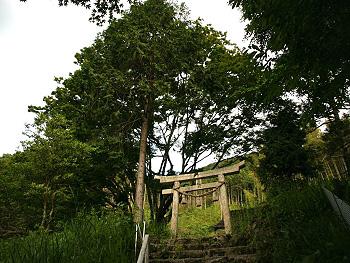 四之瀬のイロハモミジ-3